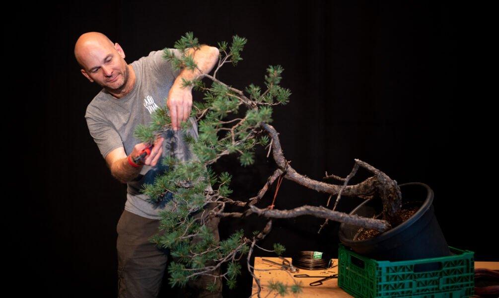 Peter Warren working on a pine